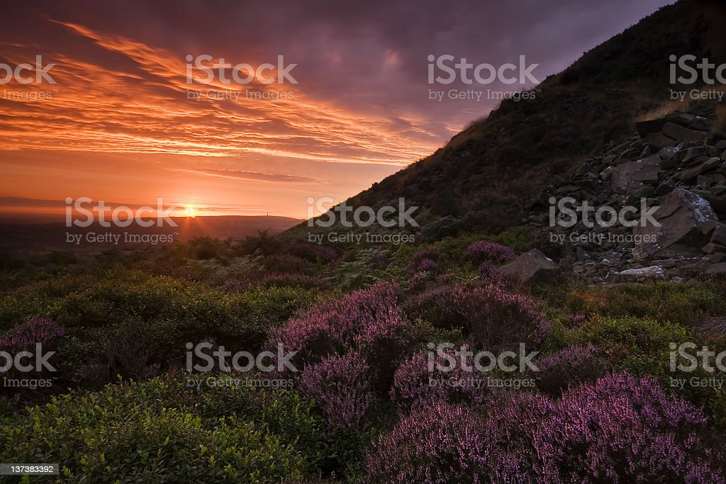 Beautiful Landscape at sunset with colorful heather royalty-free stock photo