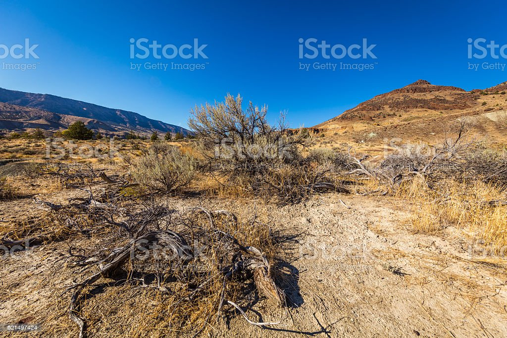 Beautiful landscape. Dry grass, small bushes on the hills background stock photo