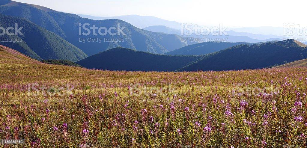 Beautiful  landscape in Carpathian mountains royalty-free stock photo