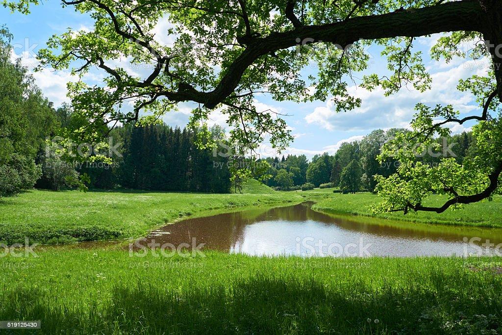 Beautiful landscape in Pavlovsk park. Saint Petersburg stock photo
