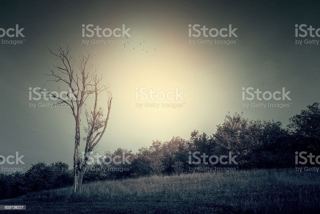 Beautiful landscape in sunset royalty-free stock photo
