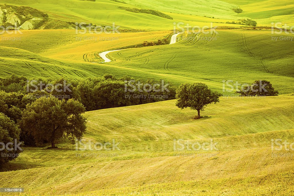 Beautiful Landscape in Tuscany at Sunset, Val d'Orcia, Italy royalty-free stock photo