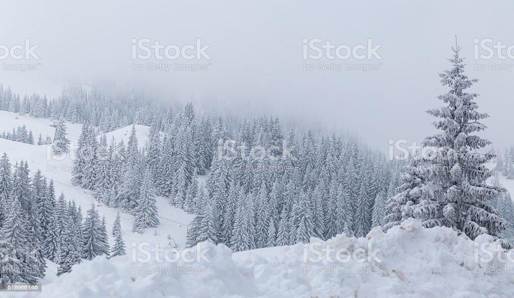Beautiful landscape, mountain Jahorina stock photo