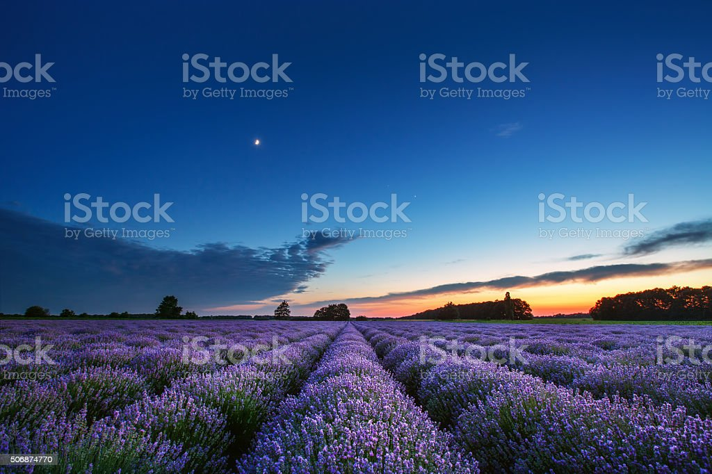 Beautiful landscape of lavender fields at sunset stock photo