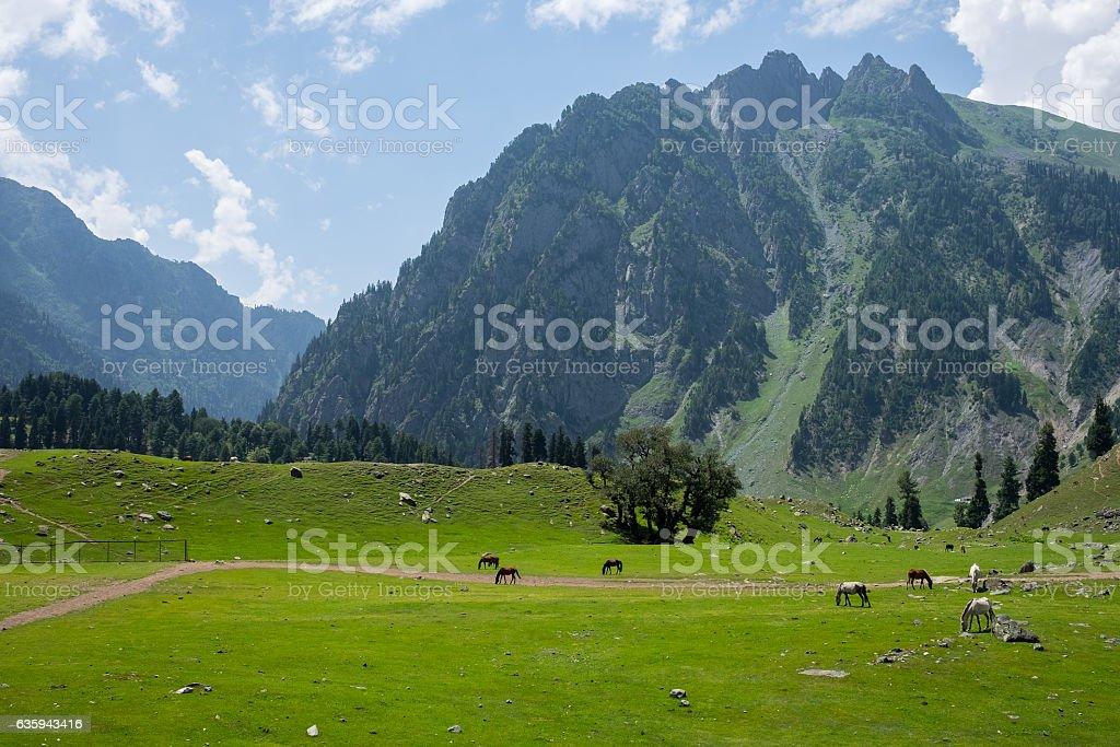 Beautiful landscape of Sonamarg with many horses, Srinagar, India stock photo
