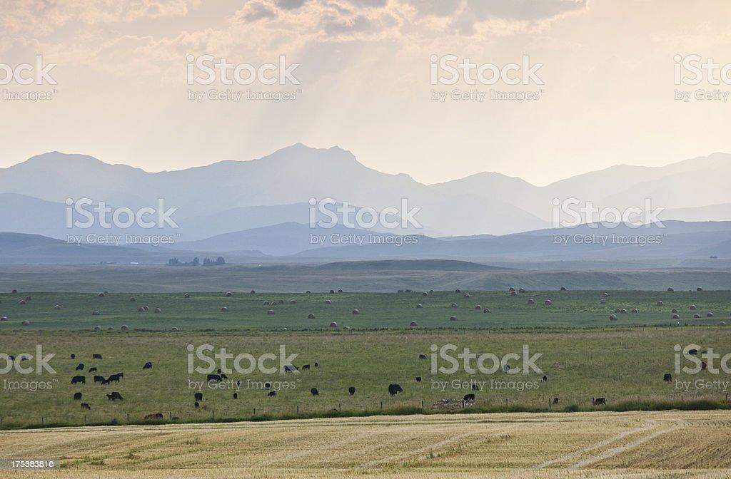 Beautiful landscape on the Alberta foothills stock photo
