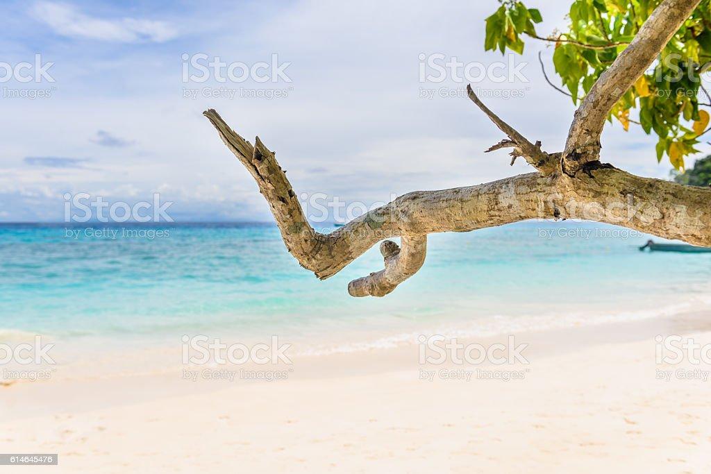 Beautiful landscape sky and blue sea under green tree stock photo