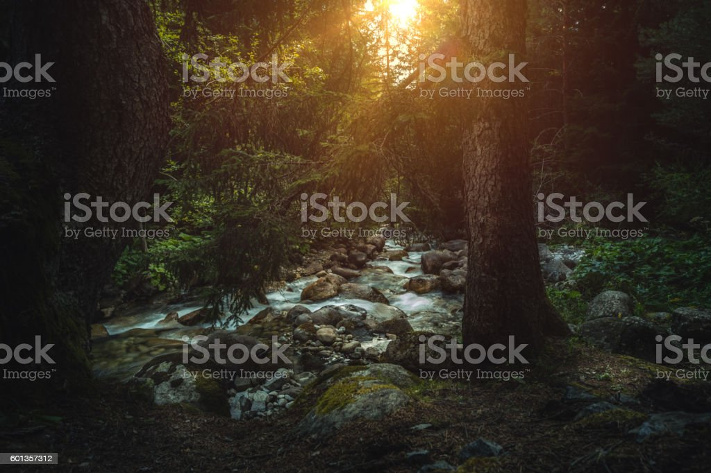Beautiful landscape. Stream in the forest. stock photo