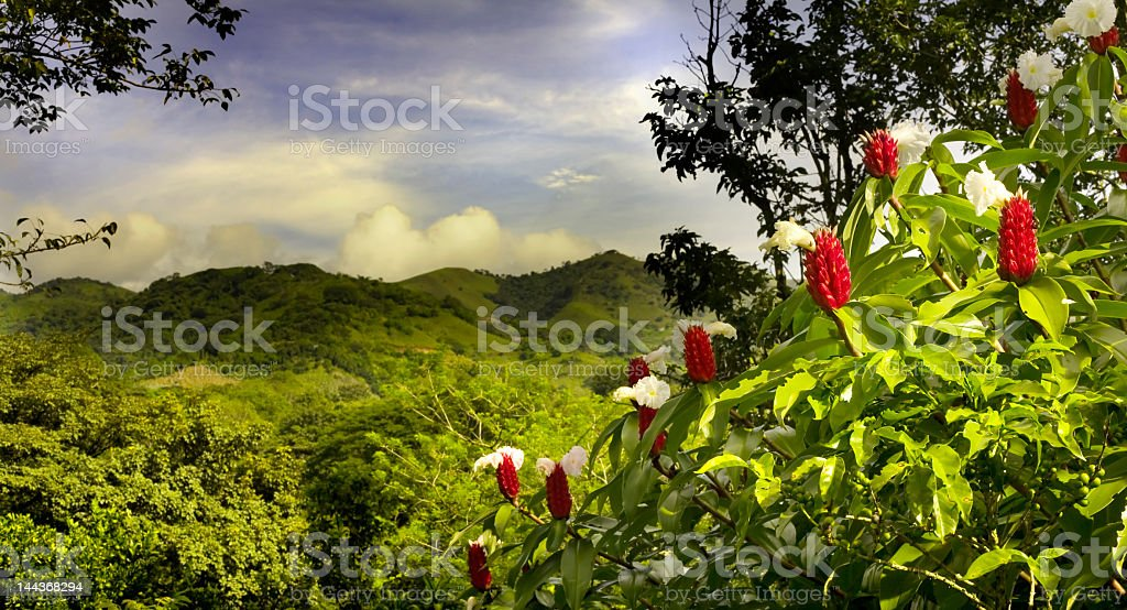A beautiful landscape view of lush foliage in Costa Rica stock photo