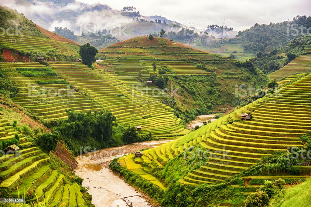 Beautiful landscape view of rice terrace in Mu cang chai stock photo