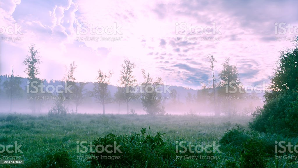Beautiful landscape with dawn mist and morning dew stock photo