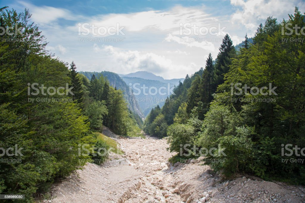 Beautiful landscape with evegreen forest stock photo