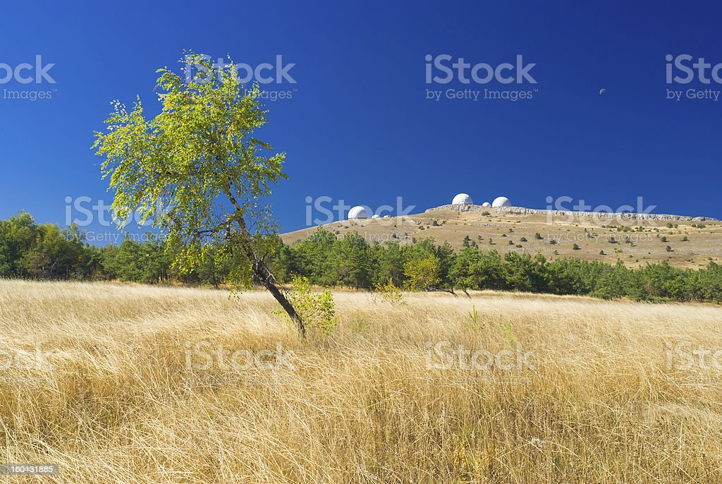 Beautiful landscape with lonely birch from Ai-Petri mountain stock photo