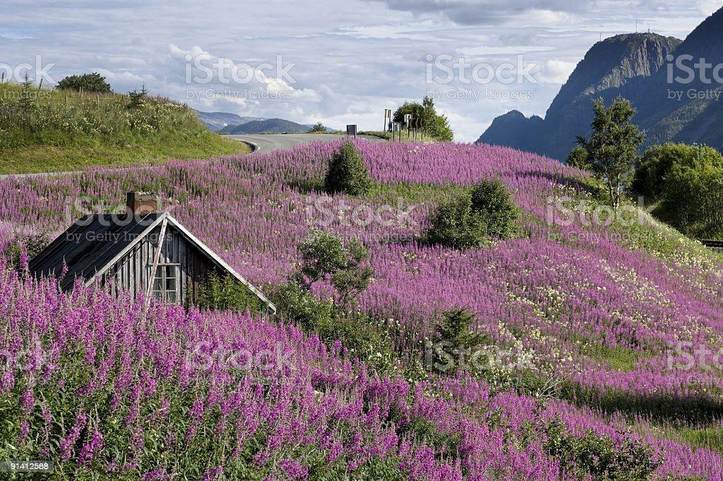 ¿Mirando al paisaje? Pruebe las hojas púrpuras y las flores rosadas de China: NorthEscambia.com