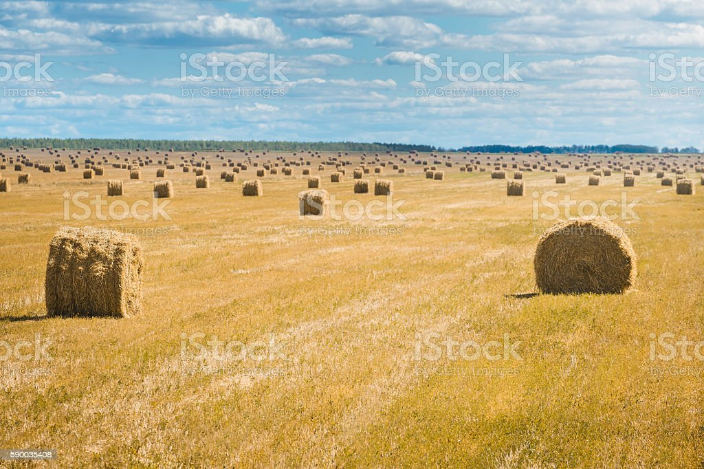 Beautiful landscape with straw bales in end of summer. stock photo