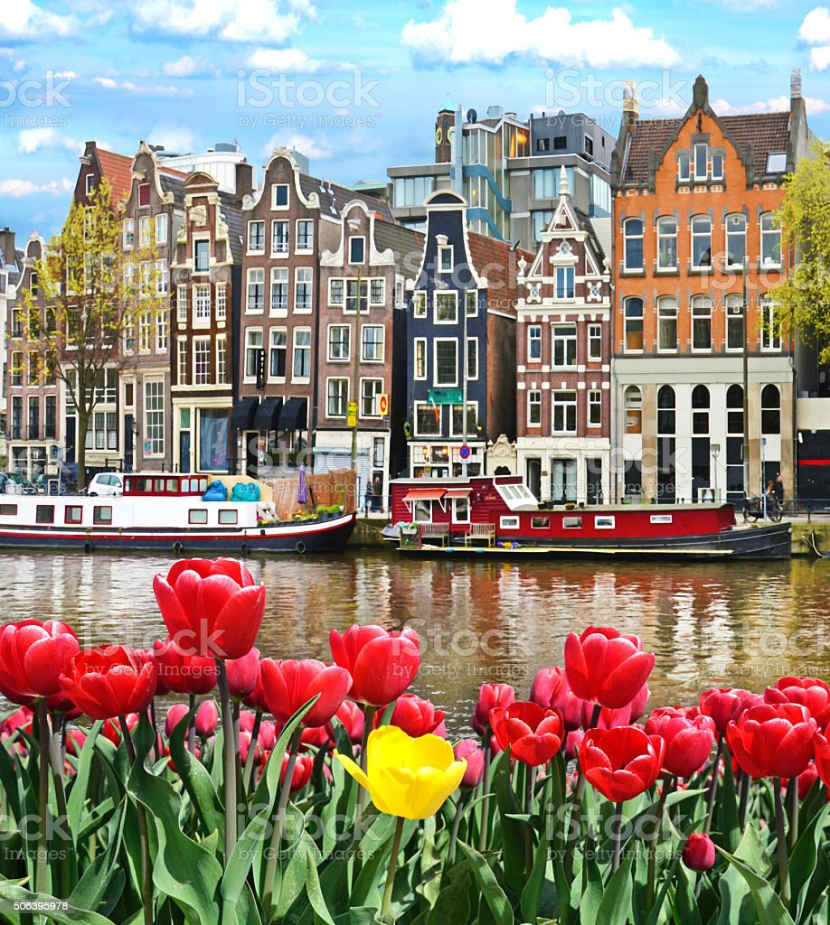 Beautiful landscape with tulips and houses in Amsterdam, Holland stock photo
