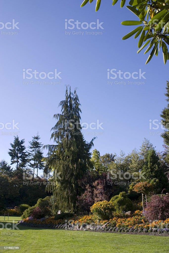 Beautiful landscaped garden royalty-free stock photo