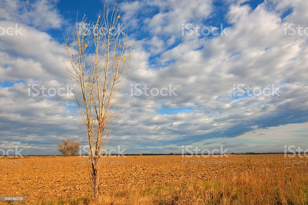 Beautiful Late Autumn Field Landscape stock photo