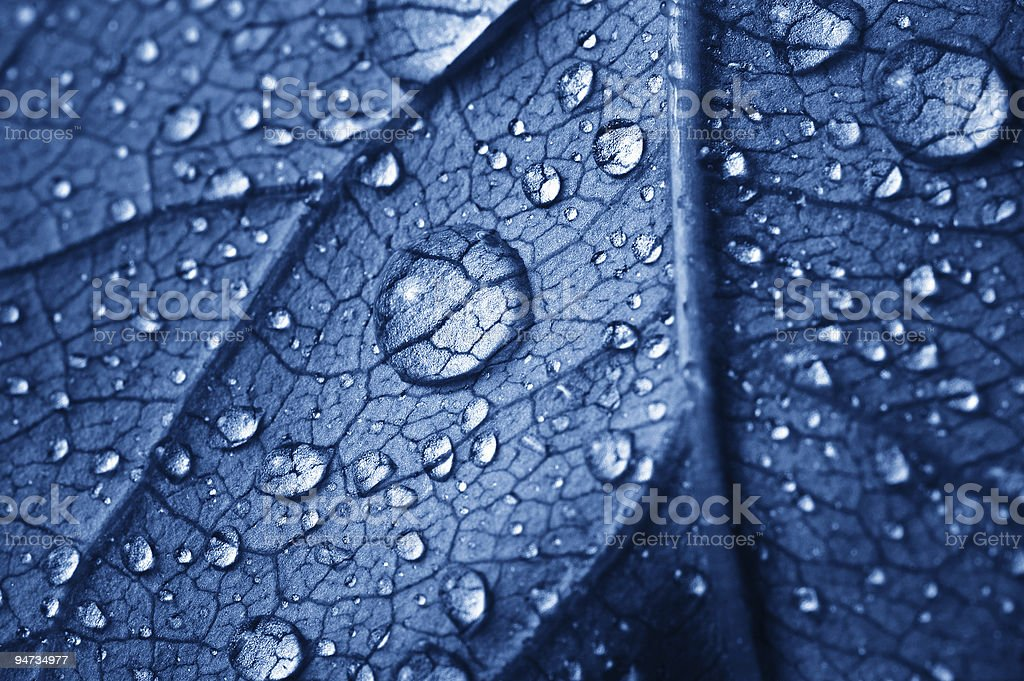 beautiful leaf with drops royalty-free stock photo