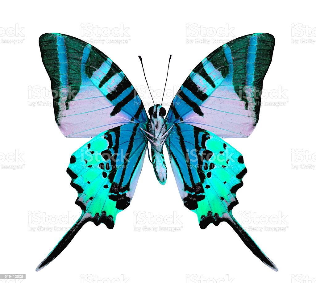 Beautiful light blue butterfly in fancy color isolated on white stock photo