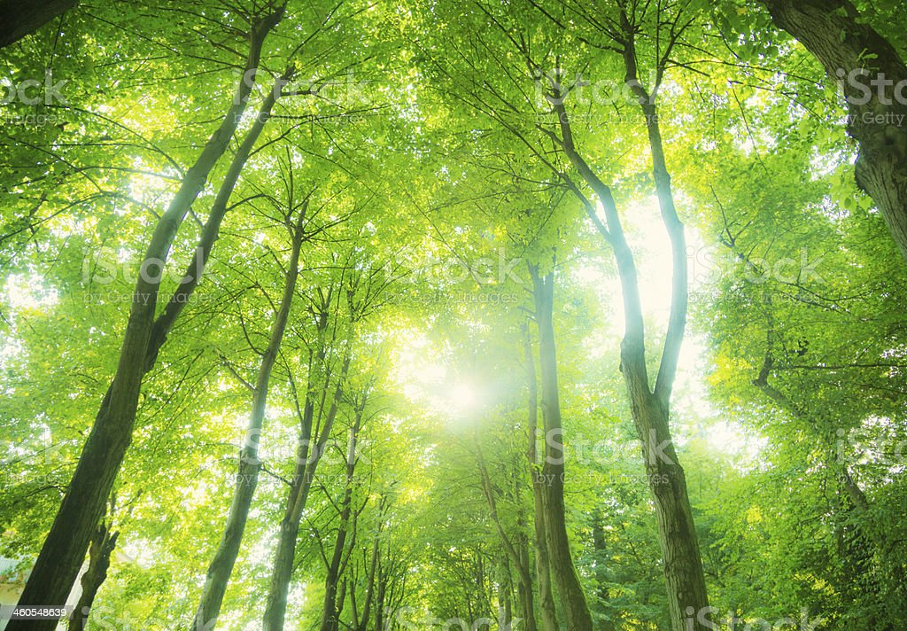 Beautiful light in the green forest stock photo