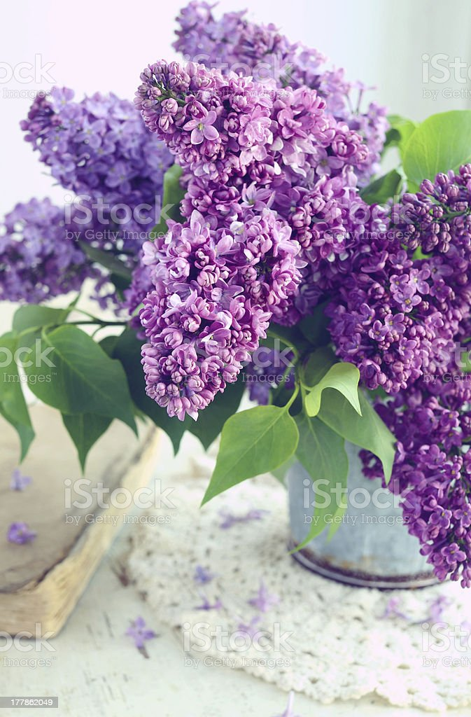 Beautiful lilac flowers in grey vase royalty-free stock photo