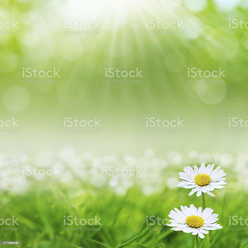 Beautiful Lilac flowers stock photo