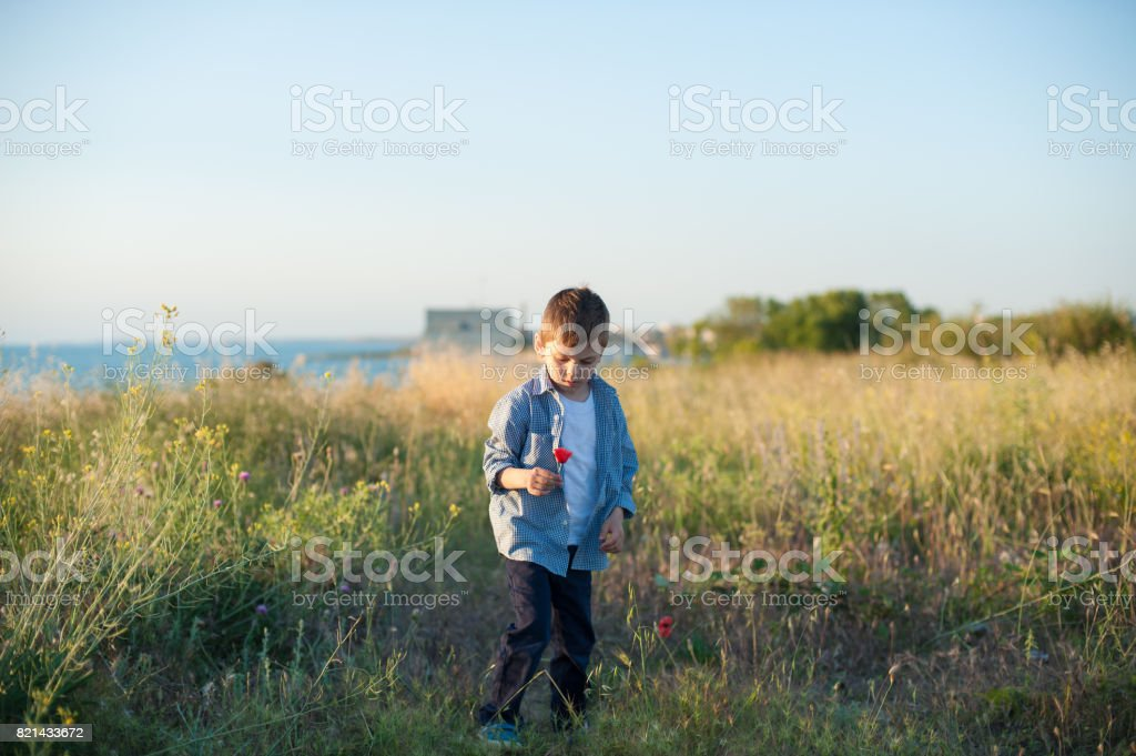 Beautiful little boy holding a flower stands in a field stock photo