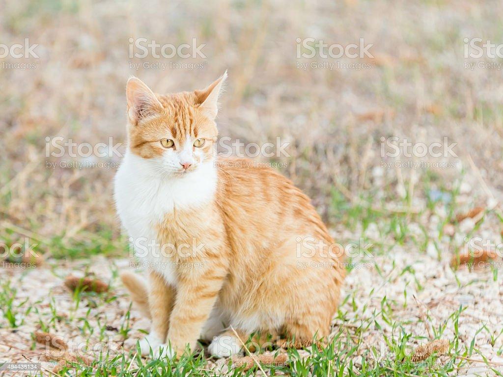 Beautiful Little Cat stock photo