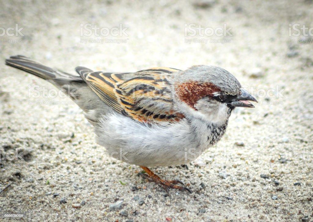 Beautiful little sparrow bird stock photo