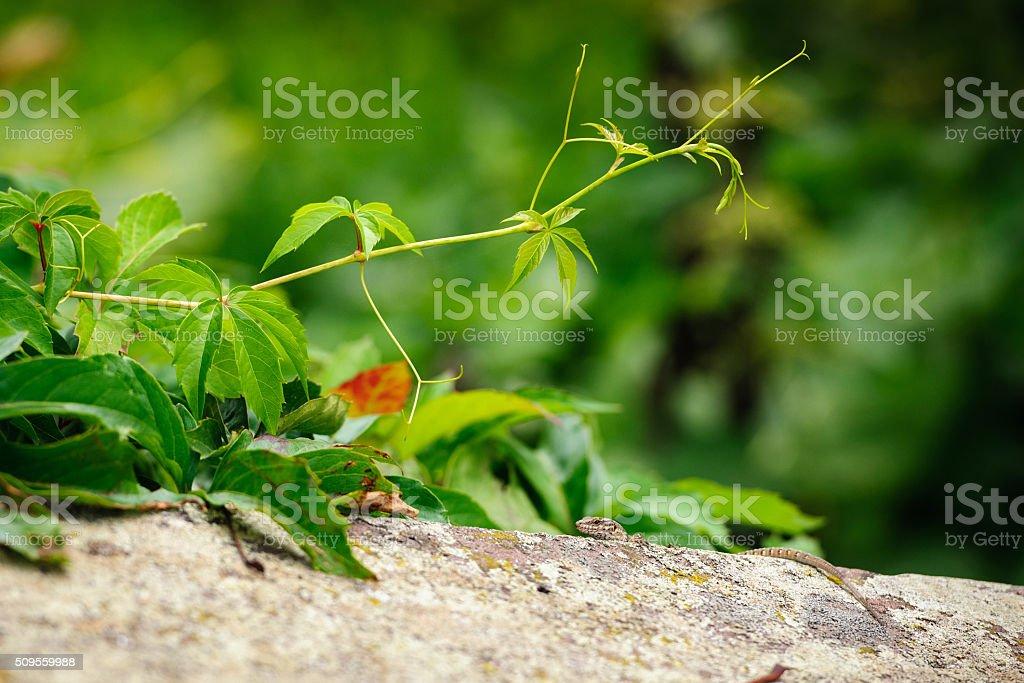 Beautiful lizard in garden stock photo