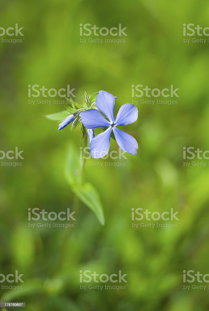 Beautiful lonely wild flower royalty-free stock photo