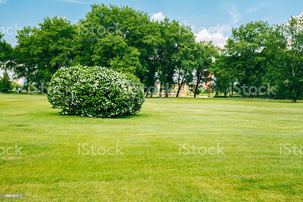 Beautiful Lush Bushes In Garden. Sunny Summer Landscape stock photo