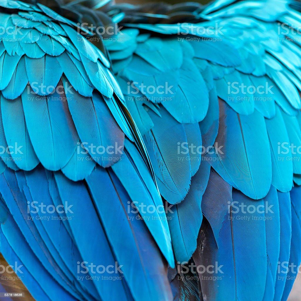 Beautiful Macaw feathers photo libre de droits