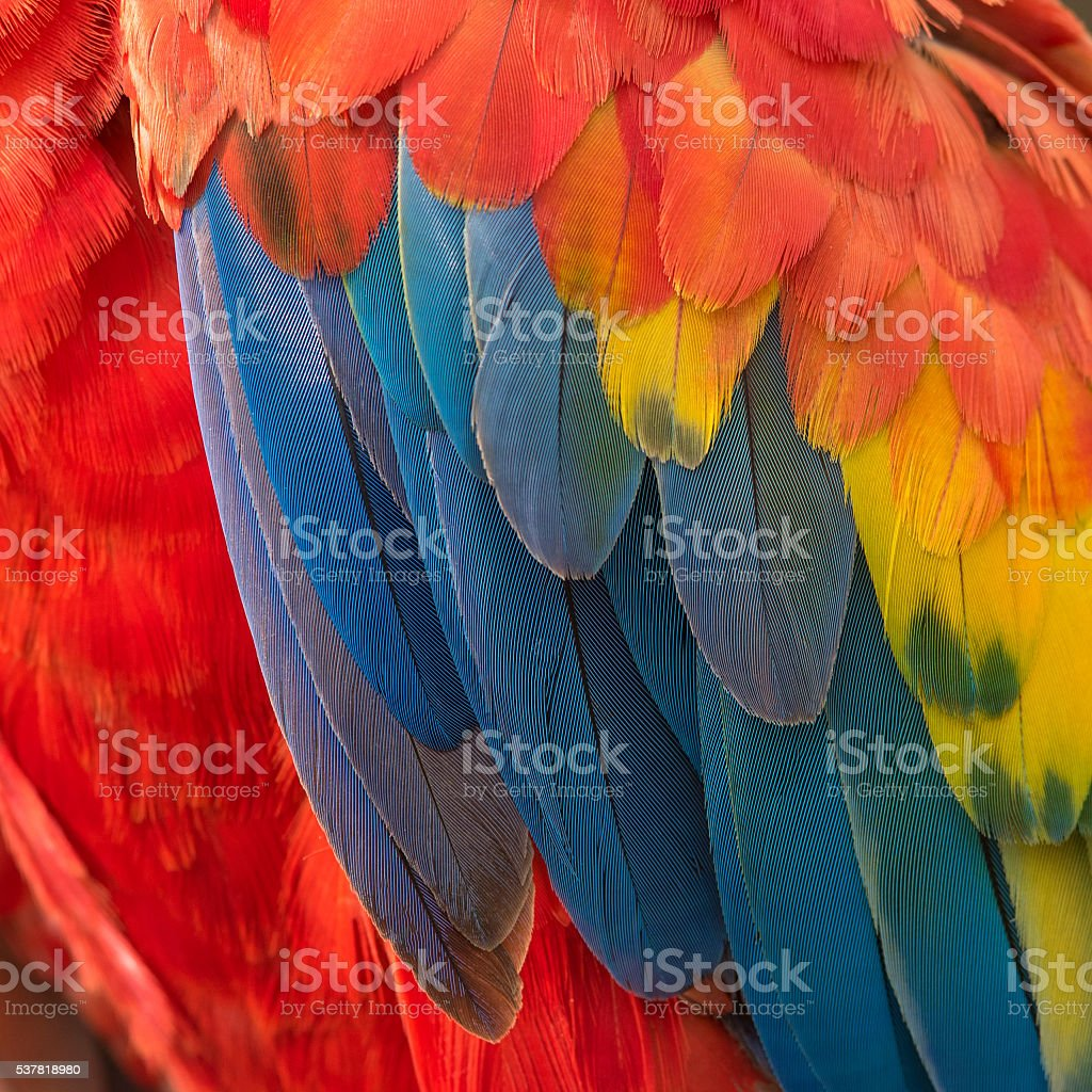 Beautiful Macaw feathers photo libre de droits