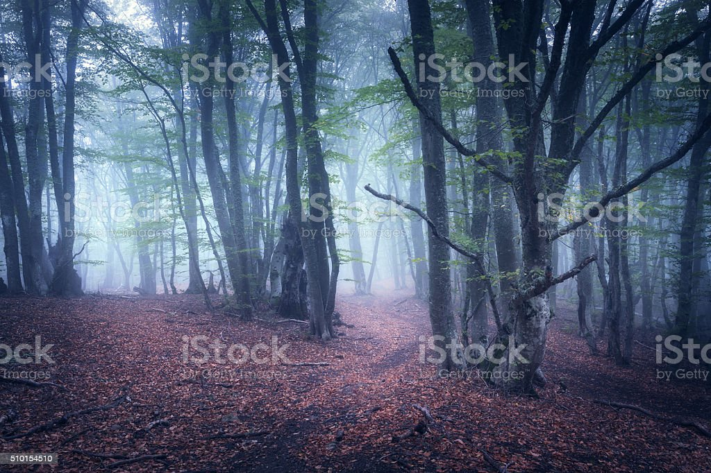 Beautiful magic forest in fog in autumn. Mysterious wood. Fairyt stock photo