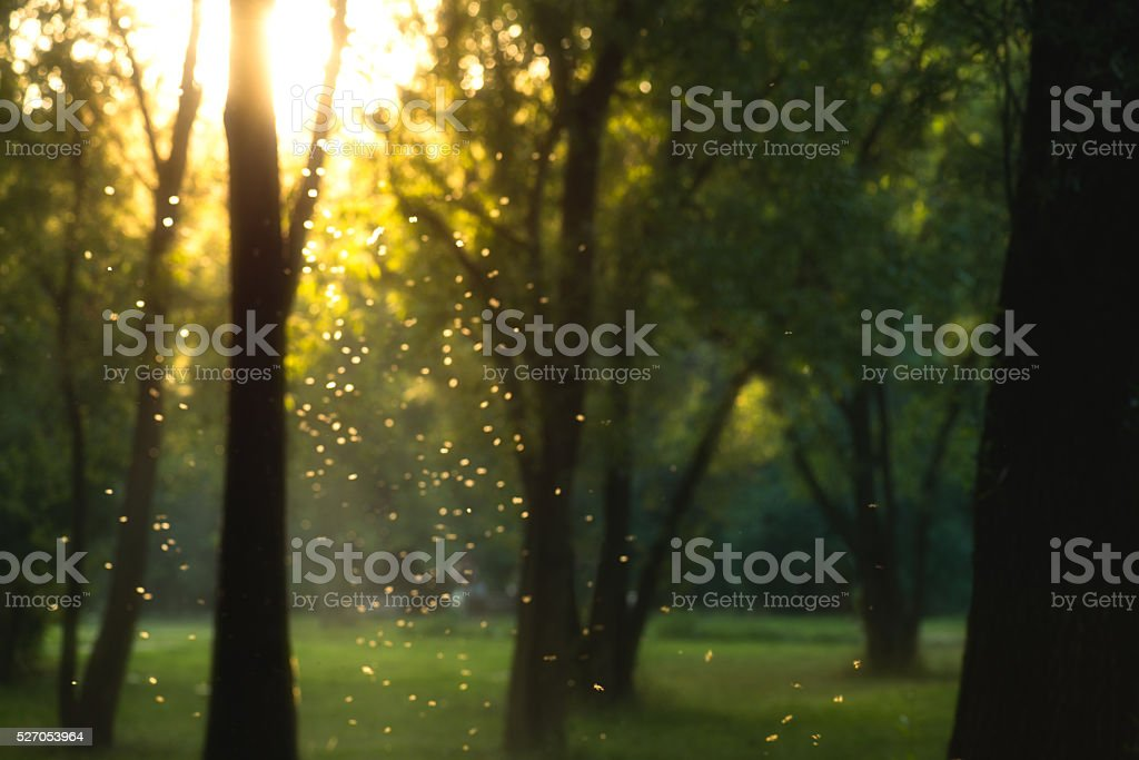 beautiful magical forest at sunset with sunlight and flying particles stock photo