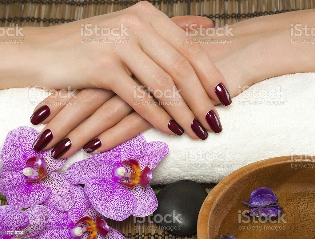 Beautiful manicure stock photo
