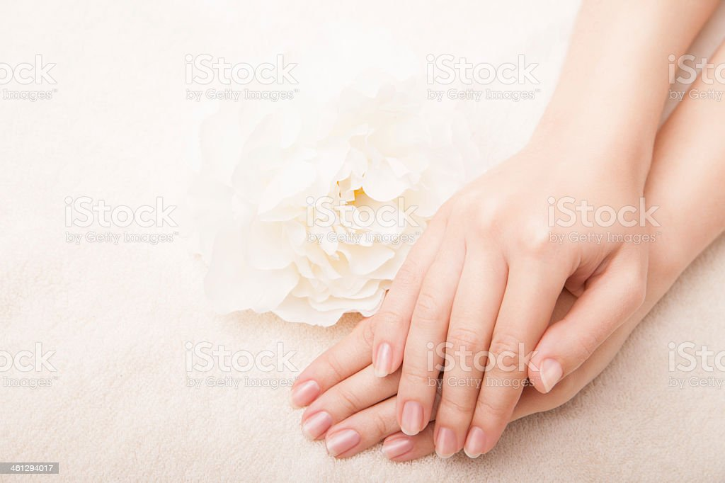Beautiful manicured hands laying next to a flower stock photo