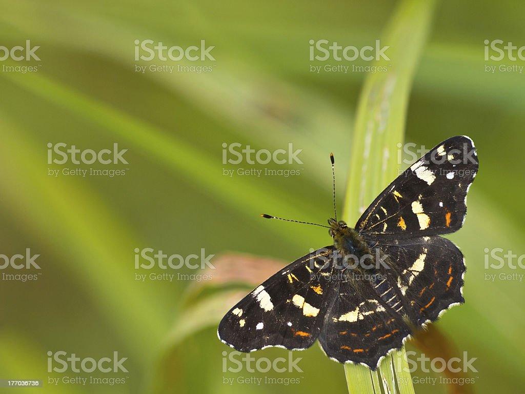 Beautiful map butterfly stock photo