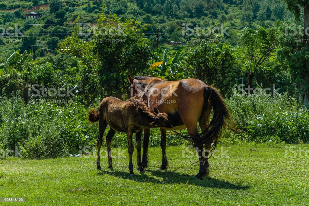 Beautiful mare with its foal standing together on pasturage stock photo