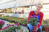 Beautiful mature woman working in flower shop
