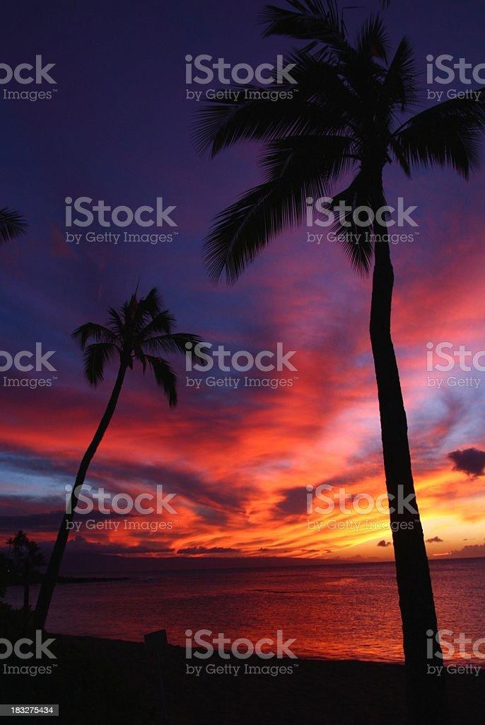 Beautiful Maui Hawaii beach ocean hotel Palm tree sunset stock photo