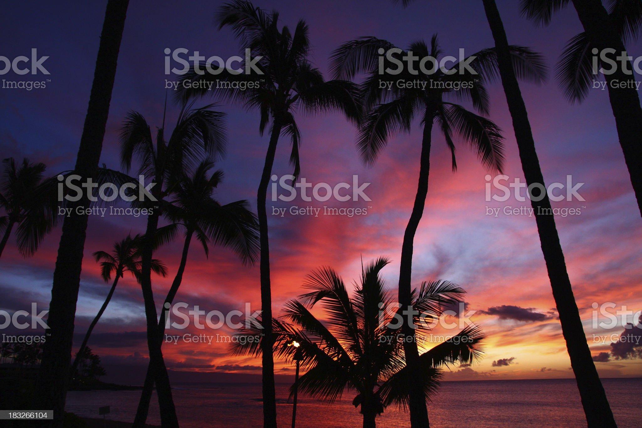 Beautiful Maui Hawaii beach ocean resort hotel Palm tree sunset royalty-free stock photo