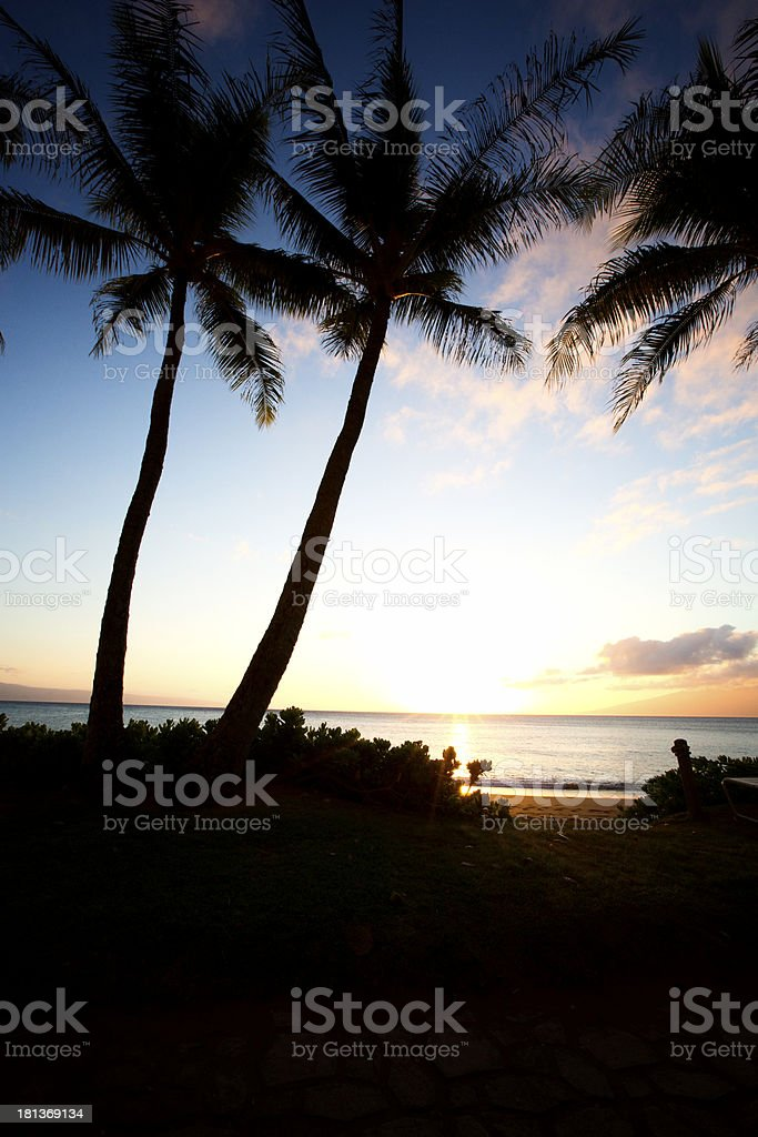 Beautiful Maui Hawaii on the beach with palm tree sunset royalty-free stock photo