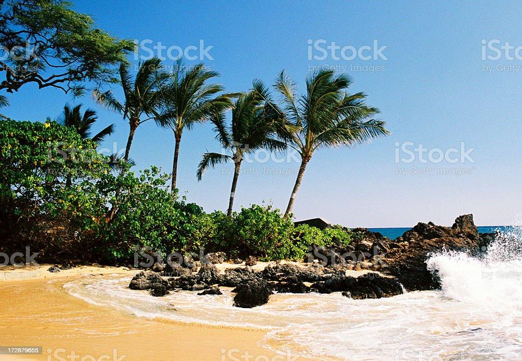 Beautiful Maui Hawaii Palm tree Pacific ocean beach scenic stock photo