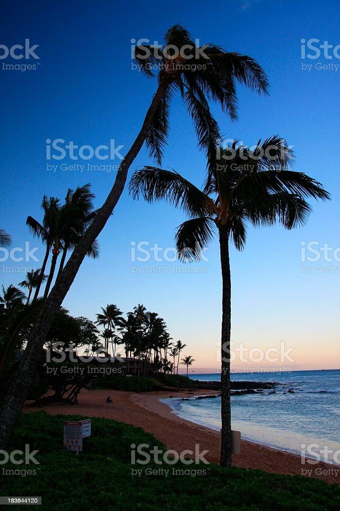 Beautiful Maui Hawaii Palm tree Pacific ocean beach sunset scenic stock photo