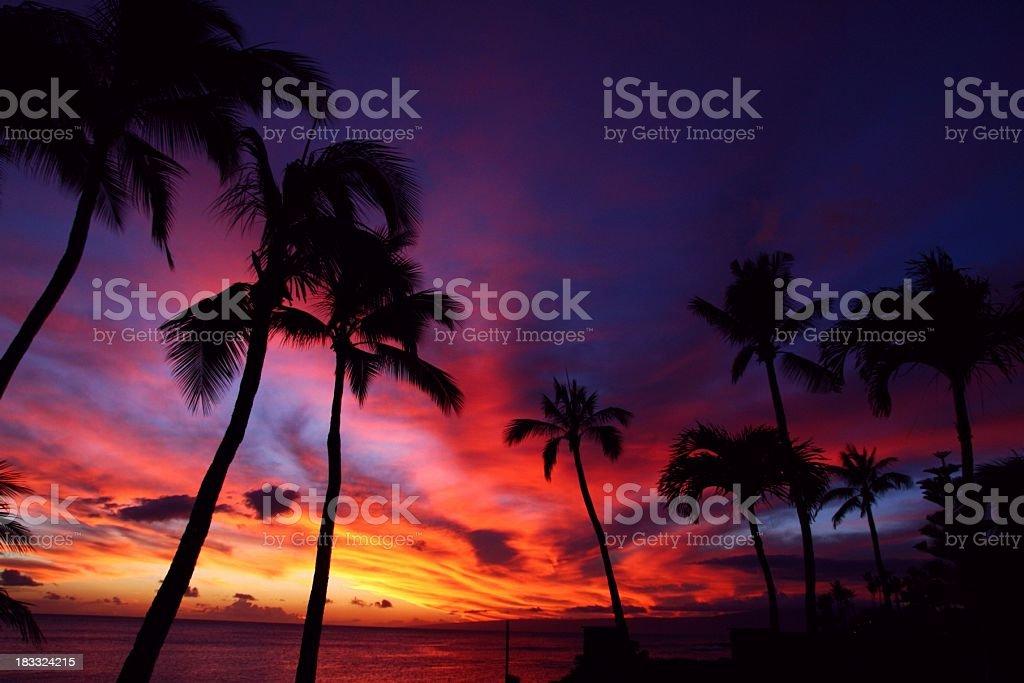 Beautiful Maui Hawaii Palm tree Pacific ocean resort sunset stock photo