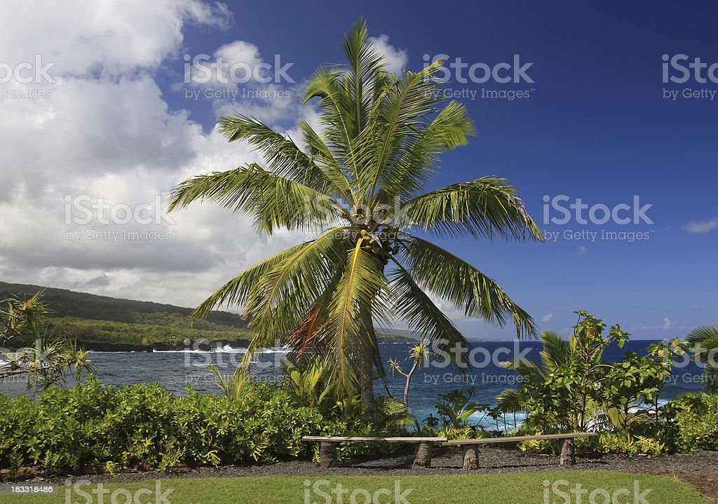 Beautiful Maui Hawaii Palm tree Pacific ocean scenic stock photo