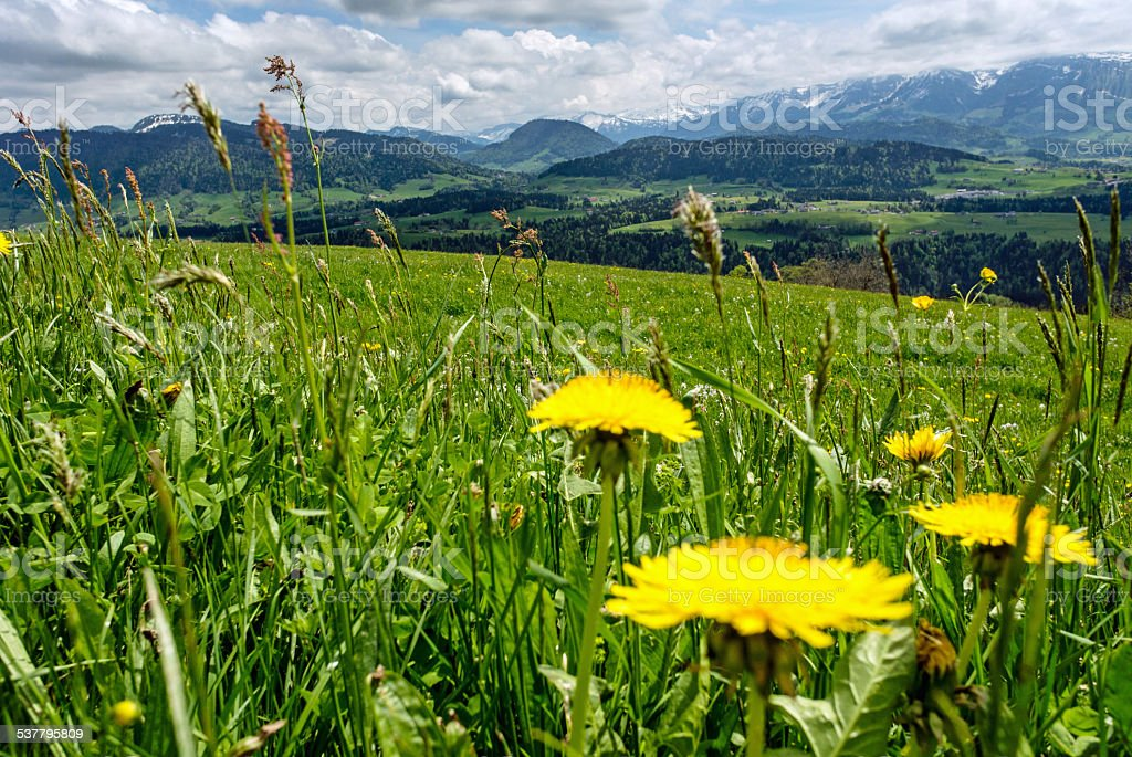Beautiful meadow in Bregenzerwald, Vorarlberg stock photo